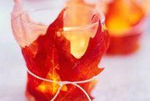 fall / by Melinda Tomasello