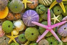 Shells and Shell Crafts / by Denise Sykora Lander