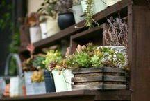 Gardening: Plants & Tools & Methods / by Sena
