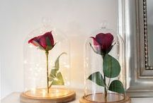 Glass Domes & Bell Jars / Simple and easy ways to style your glass dome cloche bell jars. Whether they are being used as a centrepiece for a event or weddings, an addition of victorian inspired sparkle to your home or a gorgeous gift this versatile homeware trend shows no sign of shifting!