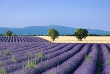 Provence (France) / by Romain Florent