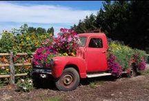Garden Ideas / by Diane Erickson
