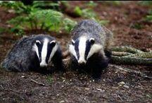 British Wildlife Photos / Photos I love of wildlife and birds