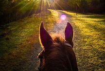 Riding / Beautiful horses, amazing riding, especially dressage inspiration.
