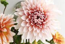 DECORATION | FLOWERS
