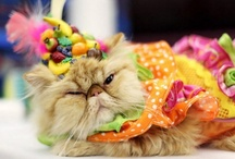 Fashion cats / Likes to dress to impress
