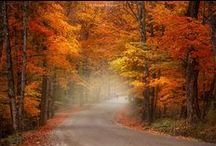 "Autunno / ""The spring seasons are hidden in the autumns, And autumns are charged with springs; flee them not.""  ~ Rumi"