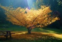 Alberi / The true meaning of life is to plant trees, under whose shade you do not expect to sit. By Nelson Henderson