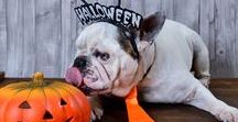 Halloween dogs / Our pets in Halloween time