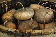 Love those gourds~ / by Kris Casucci