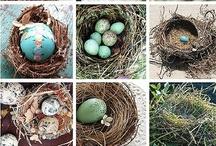Bird eggs & nests~ / by Kris Casucci