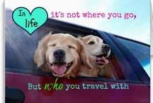 Golden Retriever Dog Quotes / Some quotes about life and love, as illustrated by golden retrievers Augie and Ti! Come visit our website (www.AugieDoggy.com), our shop (www.Zazzle.com/AugieDoggyStore*) and our Facebook page (http://www.facebook.com/AugieDoggyFanPage)!