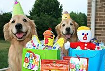 Golden Retriever Birthdays! / Come celebrate with us, the golden retriever way!  Past and present doggy birthday parties, featuring Augie and Ti and friends! Please check out our store, too!  www.Zazzle.com/AugieDoggyStore*/