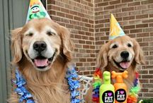 (Group Board) Birthday Dogs! / Time to party! Pin cute, fun pictures of dogs enjoying their birthdays! If you'd like an invite, follow the board and comment on one of our pins.  And check out our shop! ---------------> Zazzle.com/AugieDoggyStore*/