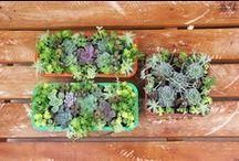 Suculentas | Cactus