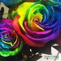 Colorindo seu dia!