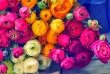 Flores / Flowers bouquets for weddings, centerpieces and daily life