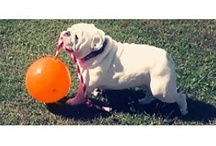 Tuggo Dog Toy / TUGGO™ uses weight to provide tension for dogs. This promotes exercise and develops muscle.