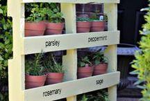 Planting & stuff