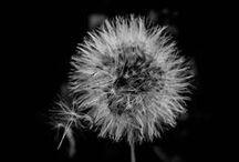 A Vida em Preto e Branco / Todas as fotos foram clicadas por mim.