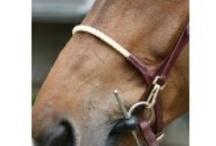 Tackroom / In de Tackroom van DocHorse vindt U alles wat u nodig heeft om het uiterste uit uw paardensport beleving te halen...!