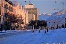 Alaska / by Honey Bea
