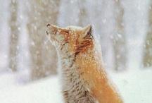 Dogz / Wolfs