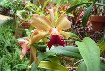 Orquídeas II / by Sergio