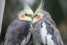 Birdz <3