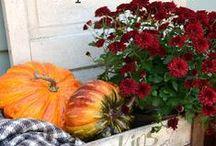C o l o r f u l autumn