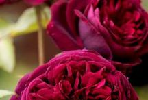 Beautiful Flowers | Floral Photos Images Pictures / Beautiful pictures of flowers or any articles or useful information related to flowers! Please make sure there is no spamming and no adult contents. #flowers #floral