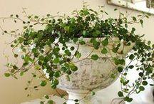 Planten en bloempotten