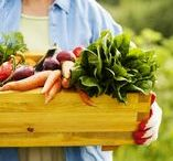 Vegetable Garden / Find the inspiration you need to grow a vegetable garden