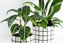 Greenery / Beautiful greens plants to decorate your home