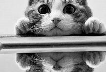 Cat House / by Mj Az