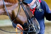 KWPN / The best Dressage horses in the world