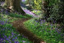 Pathways / I love exploring pathways.....they are sometimes mystic and the bends in them....you never know what delights lie ahead.