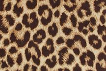 Leopard..my passion