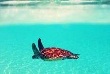 Inspiratie   Vakantiebestemmingen