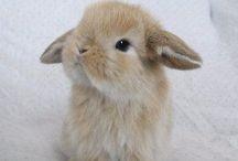 Zana's bunnies