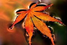 Fall/Colorful Autumn / by Terri / Great Grub, Delicious Treats