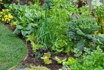 Gardening....I dig it