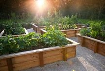 Raised Beds / How to place nourishment into the ground and what you do until that occurs. Well we raise everything up!