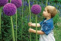 Sensory Garden / When you touch, you feel.