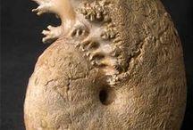 paleontologia / skamieliny