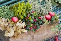 Gardening: Christmas Decorations / Christmas decorations made from natural materials