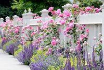 Gardening: Cottage Garden