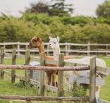 Pet Friendly Weddings / Pet friendly weddings