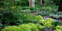 Gardening: Woodland and shade gardens