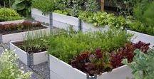 Gardening: Vegetable garden